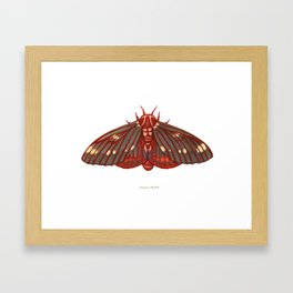 Regal Moth Framed Art Print