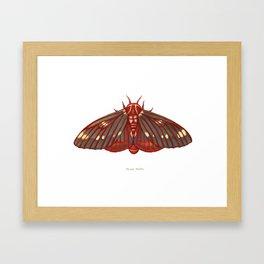 Regal Moth Framed Art Print