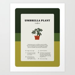 Umbrella Plant Care Art Print