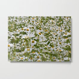 White and Yellow Daisies Metal Print