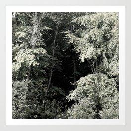 FORET 001/ 03 Art Print