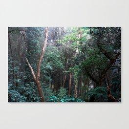 Bosco del Sasseto Canvas Print