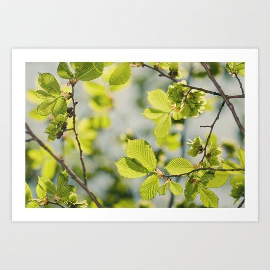 Fresh Spring Leaves Art Print