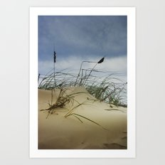 Dune and Beach Grass on Padre Island National Seashore Art Print