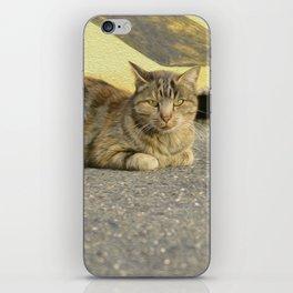 Cat of street iPhone Skin