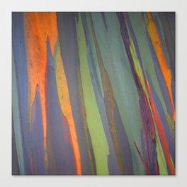 Rainbow Eucalyptus Magic Canvas Print