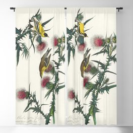American Goldfinch from Birds of America (1827) by John James Audubon etched by William Home Lizars Blackout Curtain