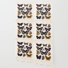 Vintage Scientific Insect Butterfly Moth Biological Hand Drawn Species Art Illustration Wallpaper