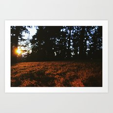 Fall's Last Light Art Print