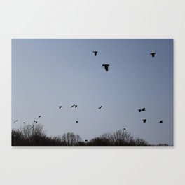 Flying birds. Canvas Print