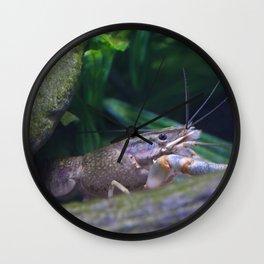 The crayfish Wall Clock