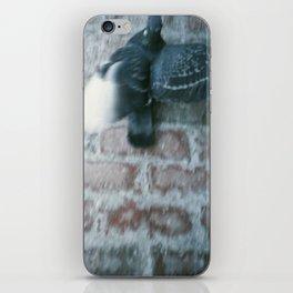 pigeon  iPhone Skin