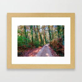 Country road surrounded by a forest in a natural park during autumn Framed Art Print