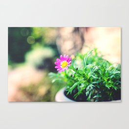 A Thousand Miracles Canvas Print