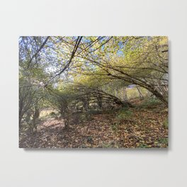 Fall in the Pyrenean forest Metal Print