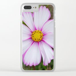 Winter Cosmos Flower in Pink 7 Clear iPhone Case
