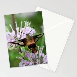 Hummingbird Moth Stationery Cards