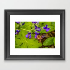 Hummingbird Moth Framed Art Print