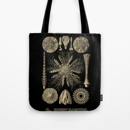 """""""Echinidea"""" from """"Art Forms of Nature"""" by Ernst Haeckel Tote Bag"""
