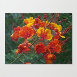 Red Bird of Paradise #1 Canvas Print