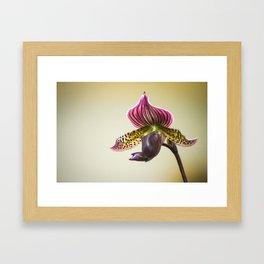 Lady Slipper Orchid Framed Art Print