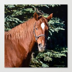 Miss Sadie - A horse, of course Canvas Print