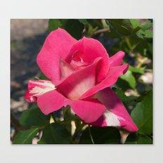 Bon-Bon Rose Canvas Print