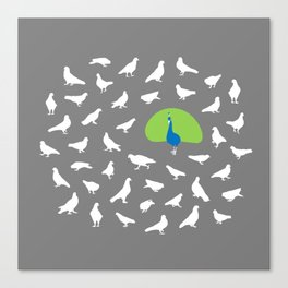 Don't Give a Flock! Canvas Print