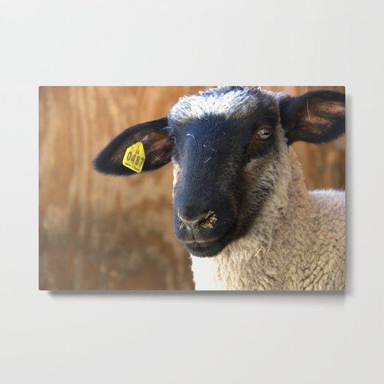 Lamb #0487 Metal Print