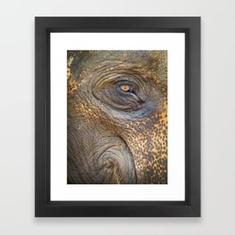Close-up Elephant eye Framed Art Print
