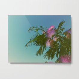 Mimosa Tree in Bloom Metal Print