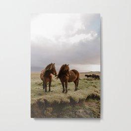 Two Icelandic Ponies Metal Print