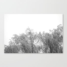 A tree and his crown in winter IV Canvas Print