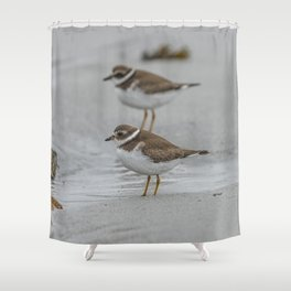 Pair of Plovers on the beach Shower Curtain