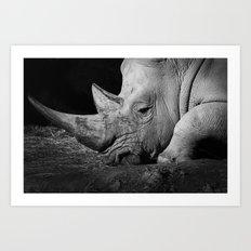 Rhino II Art Print