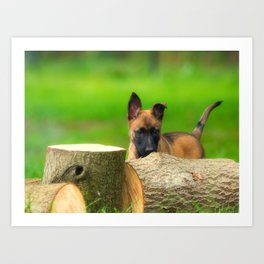 Cute Malinois Dog after the wood Art Print
