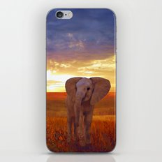 Elephant baby iPhone & iPod Skin