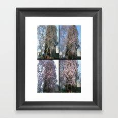 Tree Blossoms Framed Art Print