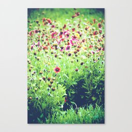 Wildly Colored WildFlowers Canvas Print