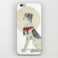 greyhound iPhone & iPod Skins featuring GREYHOUND by HOLO-HOLO