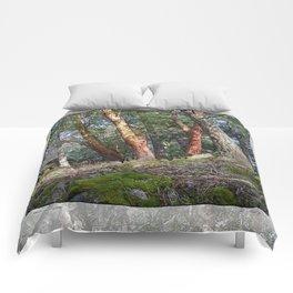 MADRONA WOODS Comforters