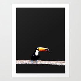 toucano black Art Print