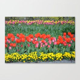 Tiered Tulips Canvas Print