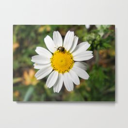 Magic Field Summer Grass - Chamomile Flower with Bug - Macro Metal Print