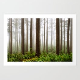 Trees // Fog Art Print