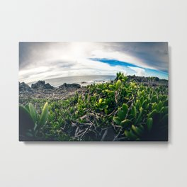 I took a chance and rolled a Paradise Metal Print
