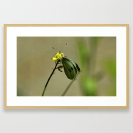 Green Winged Fairy Butterfly Framed Art Print