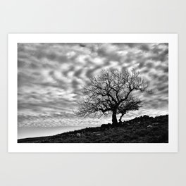 Lonely Tree with a mottled sky Art Print