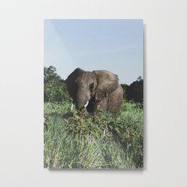 Ngorongoro Crater, Tanzania II Metal Print