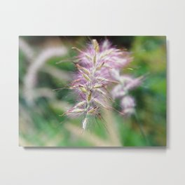 Ornamental grass Metal Print